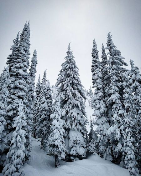 Such beauties Snow Tree Winter Forest Cold Temperature Landscape WoodLand Fir Tree Scenics Nature Outdoors No People Coniferous Tree Sky Christmas Tree Snowing Day Canada Canadian Nature Frozen Cold