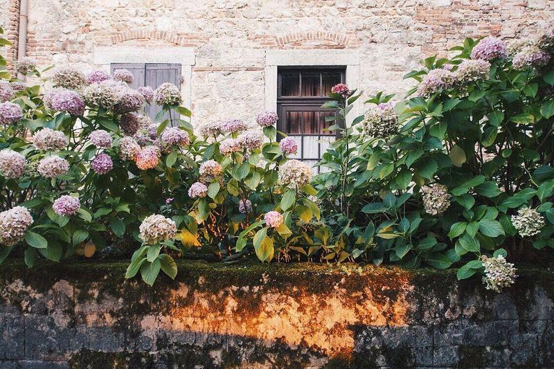Flowers blooming against window