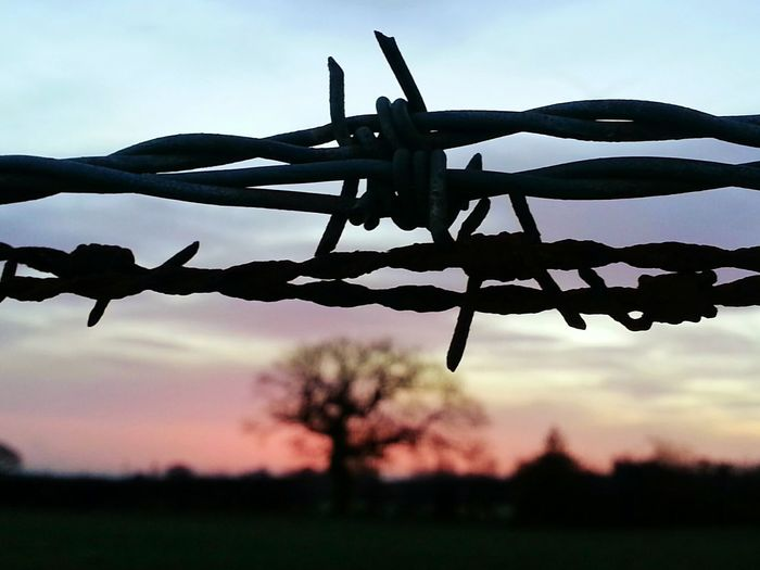 Barbed Wire Sunset Barbed Wire Sold On Getty Images