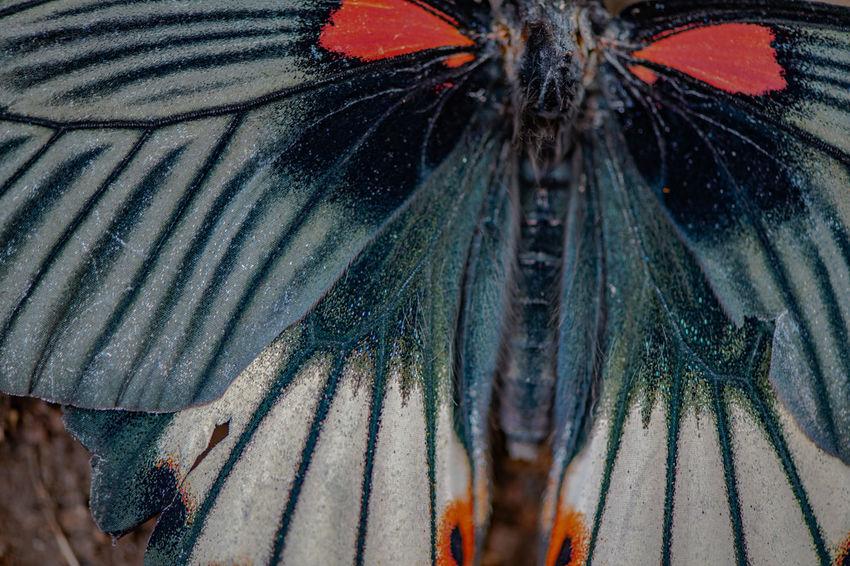 Ziseetheworld Ziwang Jiuhuashan China Zhejiang,China One Animal Animal Themes Close-up Animal Wildlife Animal Wing Insect Butterfly - Insect Invertebrate Natural Pattern Beauty In Nature Nature Animal Markings Extreme Close-up Animal Body Part Pattern Animal Eye Animal Head  Butterfly