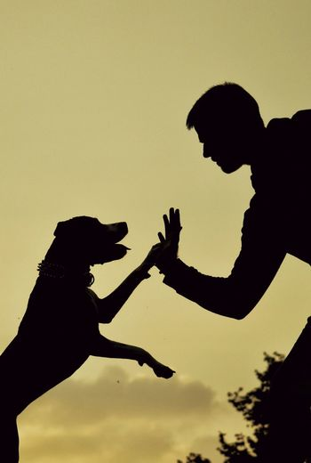Silhouette young man giving high-five to dog while standing against sky during sunset