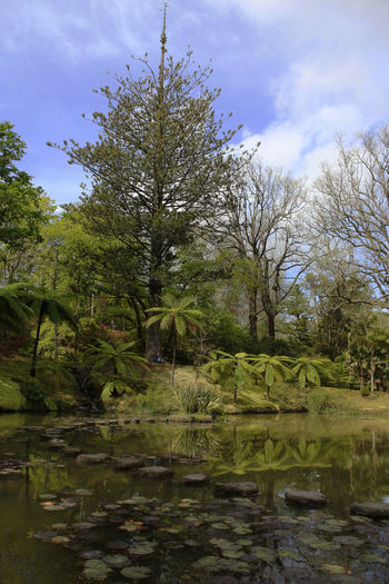 Azores Forest Furnas Green Color Landscape Nature Nature Outdoors Portugal Tranquil Scene Tranquility Traveling