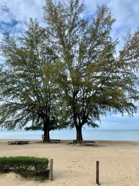 No People Sihanoukville Cambodia Otres Otres Beach Sihanouk Ville Province Beach Sea Beauty In Nature Land Scenics - Nature Nature Tree Sky Water Day Tranquility Tranquil Scene Sand Outdoors Non-urban Scene Plant ASIA Casaurina Tree Casaurina Beach