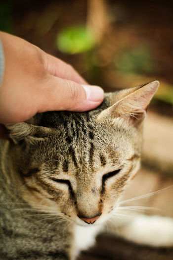 Close-up of hand touching cat