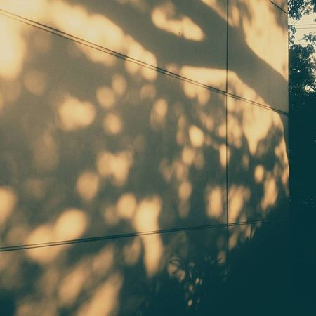 Komorebi. Nostalgia hits me. 🌞 VSCO Vscocam Komorebi Sunlight Nature Trees