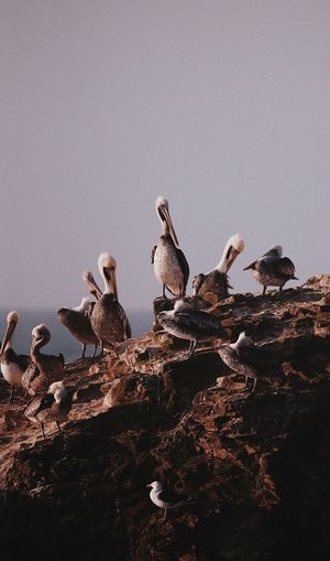 Birds Perching On Rock Against Sky