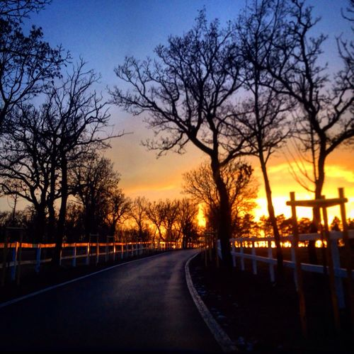 Lipica Slovenia Slovenija Sunset Colours Lipica Tramonto Viaggio Street Nature First Eyeem Photo