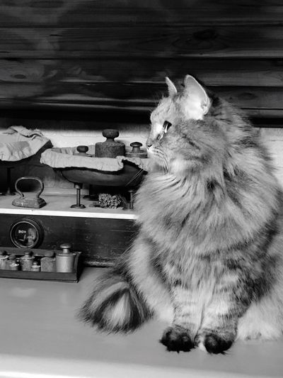 Old&Young... Animal Themes Pets Mammal One Animal Feline Cat Indoors  Home Interior No People Carnivora Full Length Day Old-fashioned Lieblingsteil Pet Portraits Black And White Friday My Best Photo
