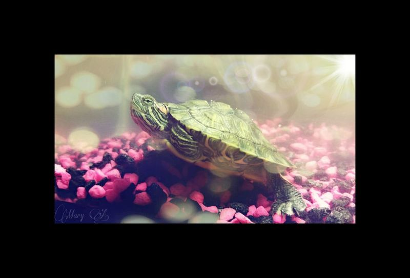 St☆rry. My new pet Baby Animals Animal Portrait Underwater World I ♥ Turtles