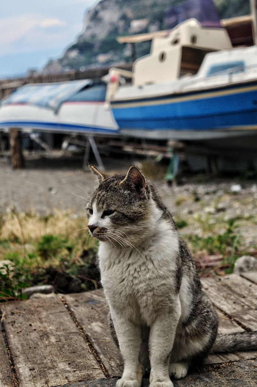 animal themes, mammal, one animal, animal, cat, domestic, pets, domestic cat, transportation, feline, domestic animals, vertebrate, focus on foreground, mode of transportation, looking away, no people, day, looking, nature, motor vehicle, outdoors, whisker