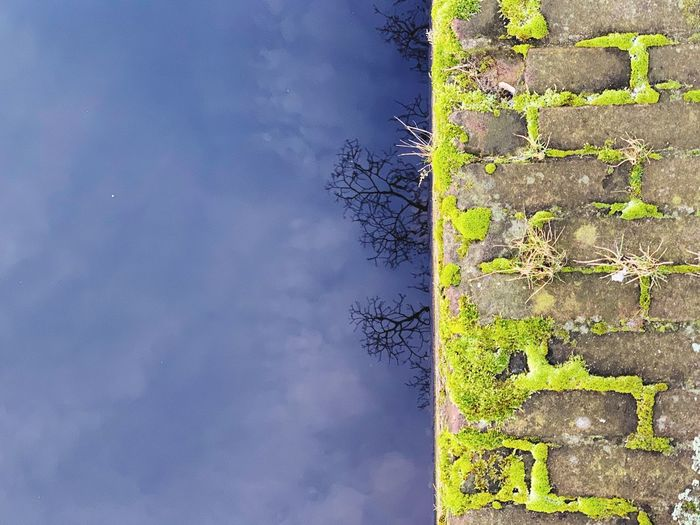 Plant No People Architecture Sky Day Built Structure Nature Cloud - Sky Building Exterior Outdoors Wall - Building Feature Wall Low Angle View Growth Tree Building Blue Beauty In Nature Green Color Yellow Stone Wall