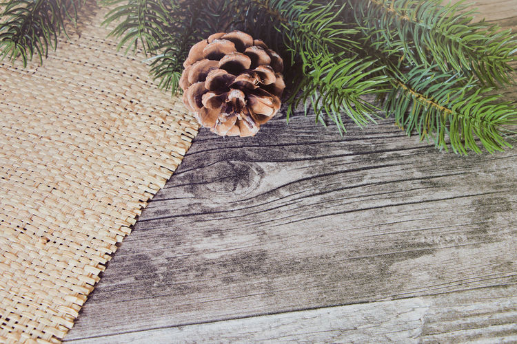 December Winter Close-up Directly Above Follia High Angle View No People Pattern Pine Cone Plant Table Textured  Wood - Material