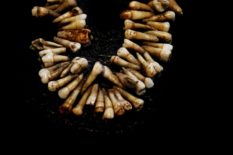 High angle view of animal teeth against black background
