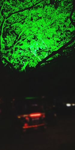 Green lantern Tree 🌲 New Pic  Tree Backgrounds Car Defocused Abstract Close-up Green Color First Eyeem Photo