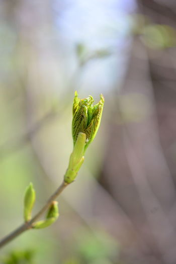 Green Color Close-up Plant Growth Focus On Foreground Nature No People Beginnings Day Beauty In Nature Selective Focus Outdoors Plant Part Leaf New Life Plant Stem Tranquility Freshness Fragility Vulnerability  Sepal