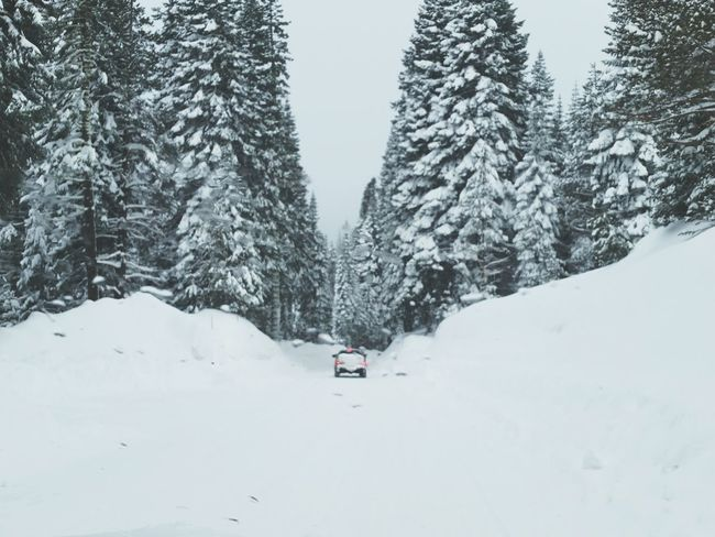 Record Snow this year blankets the Sierra Nevada Mountains Yubariver Pass Snowpack California Love Landscape_Collection Evergreen Conifer  Truck Winter Wonderland Winter Trees Winterscapes California Powderdays Landscape Beauty In Nature Snowing Tree