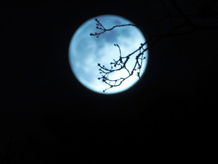 Playing With Mr.Moon Cloud - Sky Moon Last Night Night Before Full Moon Nighshot Moon Through The Clouds Moon Behind Branches For My Friends 😍😘🎁 Springtime💛 Mood Captures Simple Beauty Tranquil Scene Best Things In Life Are Free Tranquility Nature Enjoy The Little Things Beauty In Nature Eye4photography Photooftheday  Eye4photography Photooftheday  Moon Beauty On My Doorstep On My Way Back Home😍