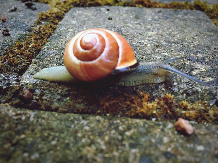 Schnecke Caragol Animal Themes Animal Wildlife Animal One Animal Animals In The Wild Mollusk Invertebrate Shell