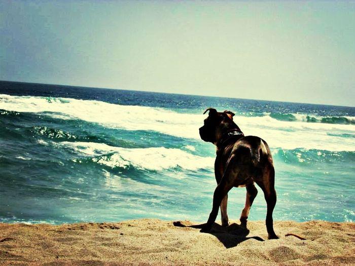 Vigilando la marea... Anka  Playa De Tunquen