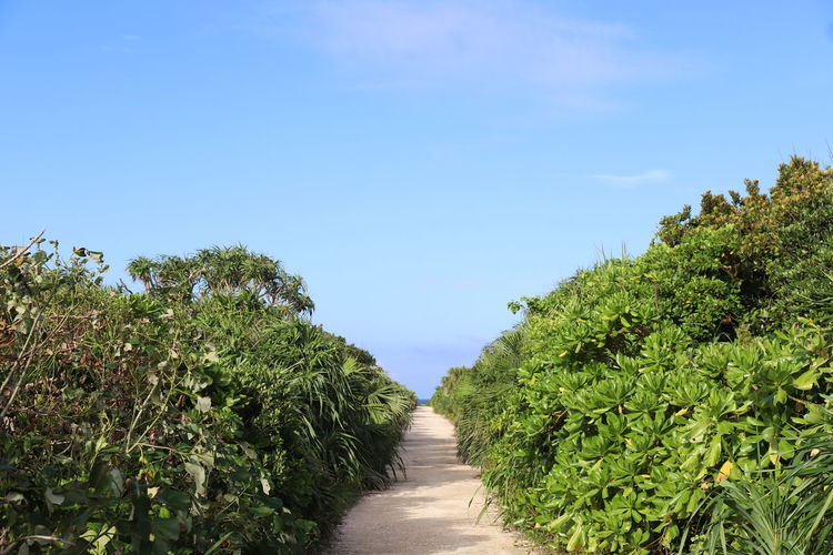 Footpath amidst plants against sky