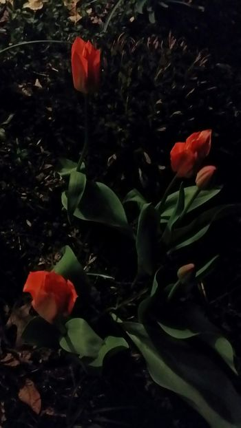 Flowers At Night Garden Photography