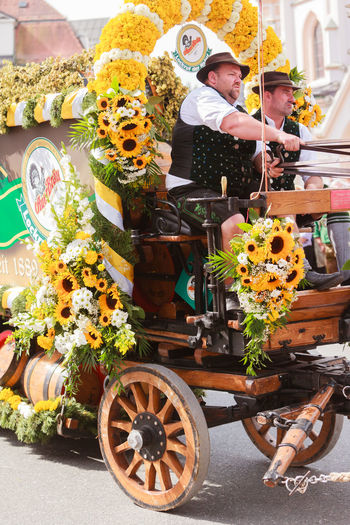 Rosenheim, Germany - September 4, 2016: coachman of horse carts of AuerBräu brewery at Thanksgiving Parade in Rosenheim / Germany Autumn Festival Bavaria Beer Beer Kegs Driving Float Horses Thanksgiving Transportation Barrels Brewery Carriage Cart Coachman Day Draft Horses Flower Horse Team Men Outdoors Pageant Parade People Real People Rosenheim