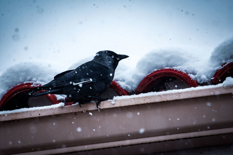 View of bird perching on snow covered railing