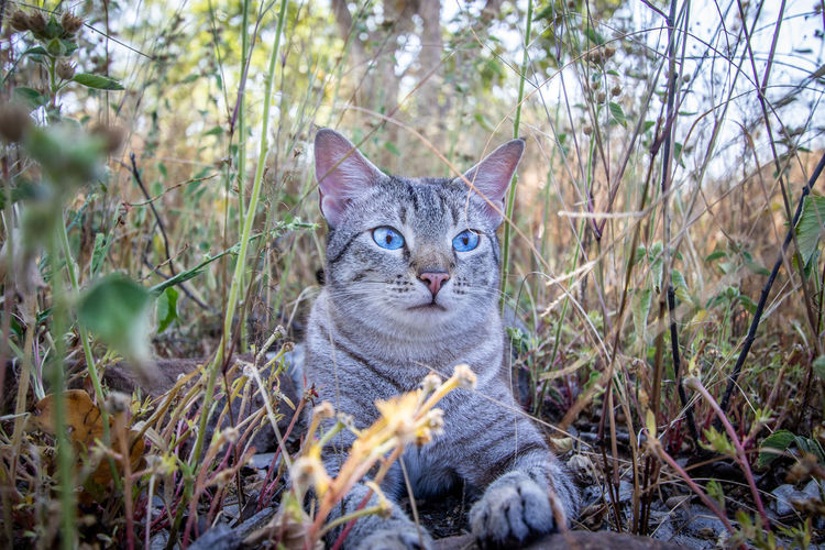 Portrait of tabby cat on land