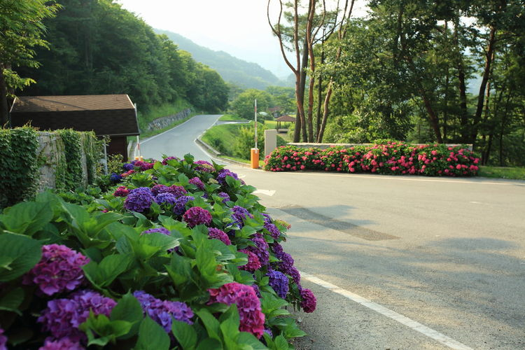 Purple flowering plants by road