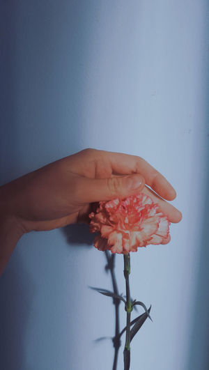 Close-up of hand holding red flowering plant against wall