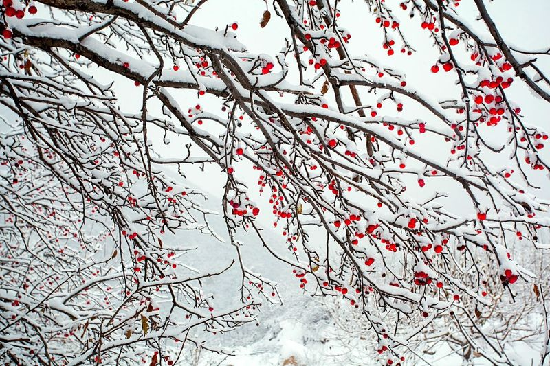 Motus Natura Landscape Outdoor Life Traveling China Photos My Hometown Outdoor Photography China. The Outer Worlds Snow ❄
