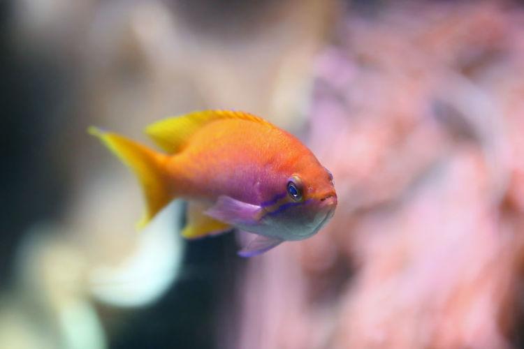 Fish at Shedd