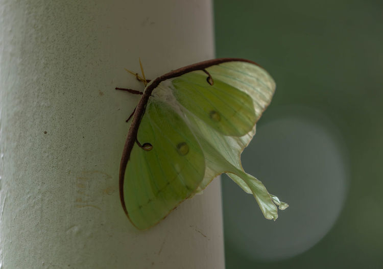 Close-up of butterfly on leaf against wall