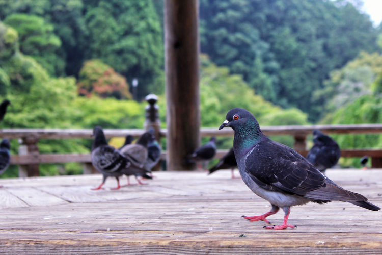 Birds perching on hardwood floor against trees