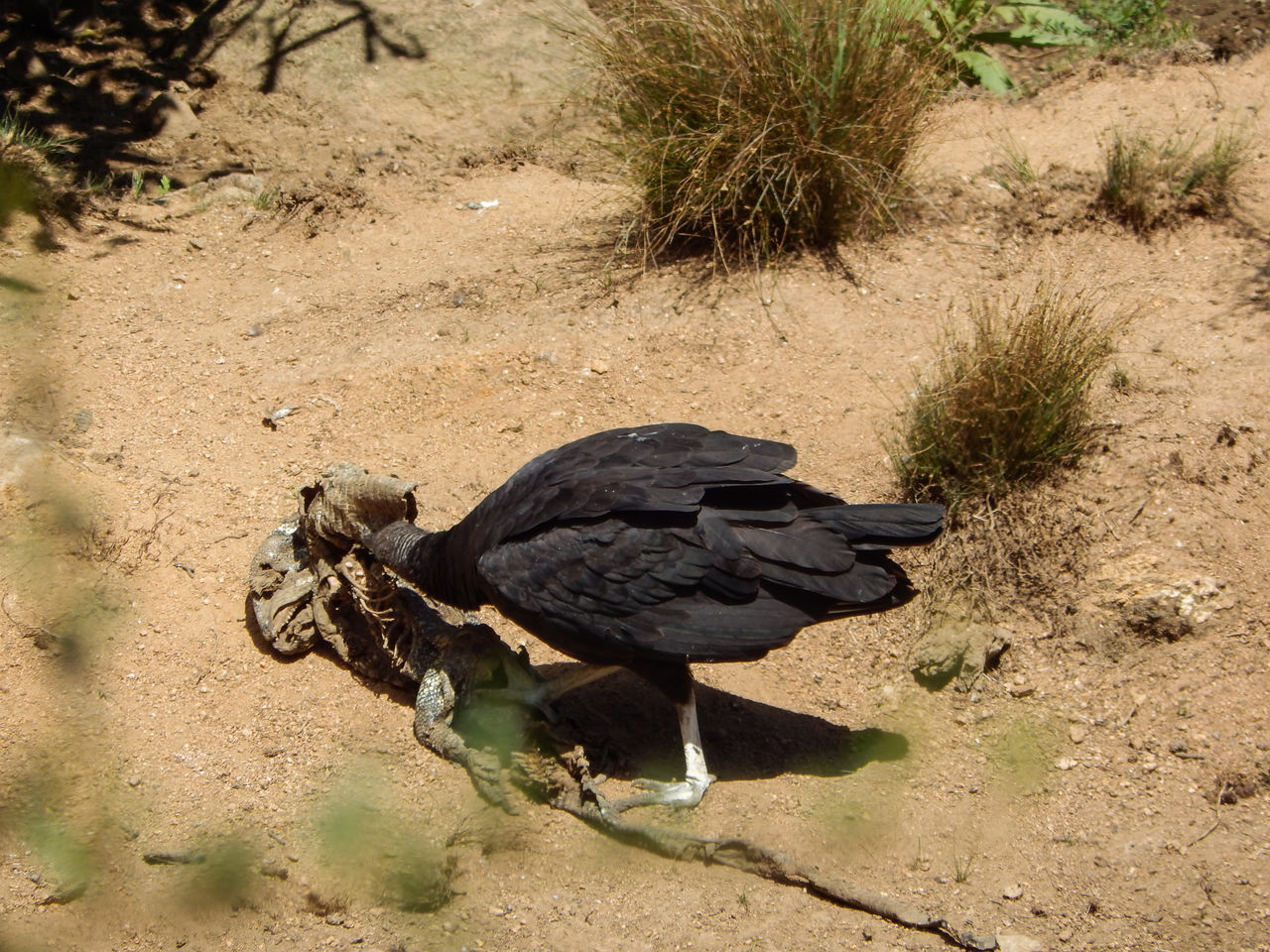 HIGH ANGLE VIEW OF BIRD PERCHING ON A LAND