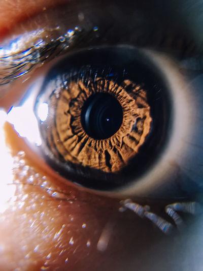 What you see is what you get Body Part Córnea Extreme Close-up Eye Eyeball Eyelash Eyesight Human Body Part Human Eye Iris - Eye Looking At Camera Macro One Person Real People Sensory Perception