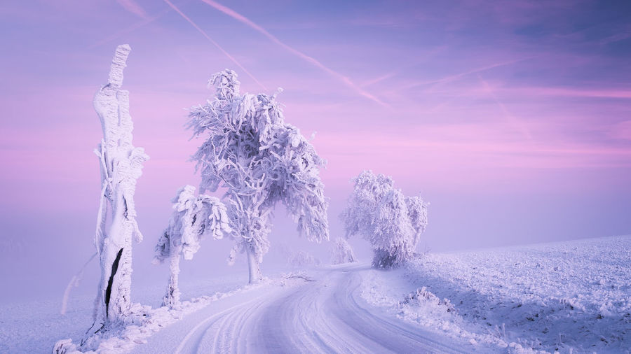 Freezing Morning Winter Beauty In Nature Candy Cold Cold Temperature Day Forest Frost Frozen Ice Illuminated Landscape Mountain Nature No People Outdoors Pine Tree Polar Climate Scenics Sky Snow Snowcapped Mountain Snowflake Snowing Sunset Tranquil Scene Tree White Wilderness Area Winter