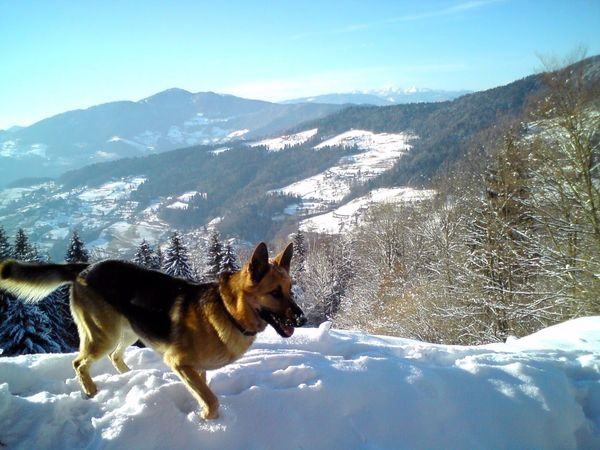 Freedom Snow Mountain Winter One Animal Cold Temperature Dog Mountain Range Pets Animal No People Animal Themes Landscape Outdoors Nature Mammal Day Sky