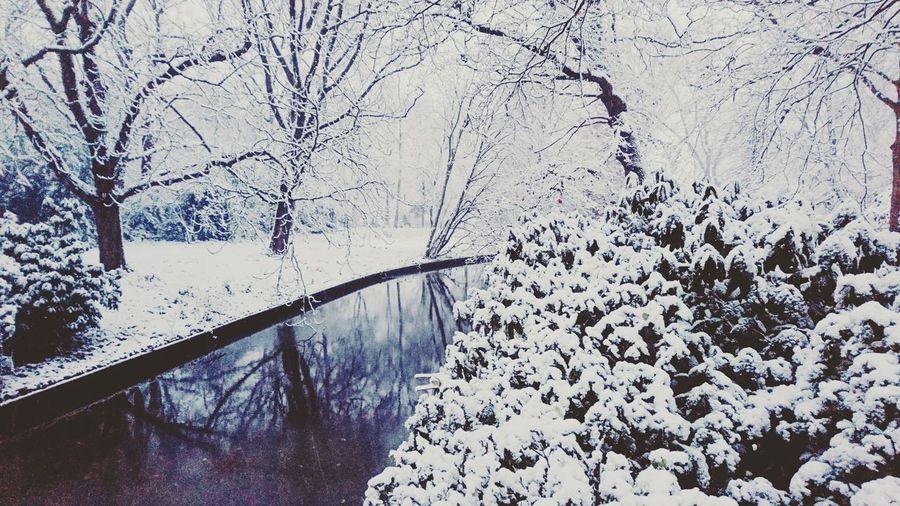 Winter-wonder-la