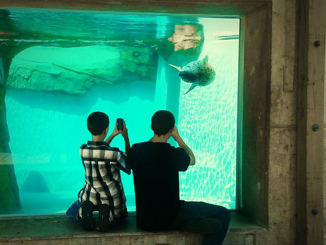 Live to Learn Homeschooling Field Trip Seal Zoo Zoo Animals  Aneye4theshot