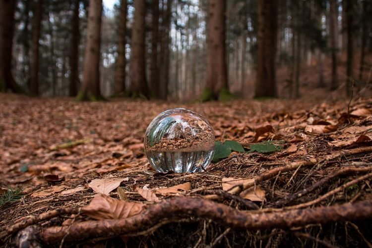 Forest Tree Forest Nature Tree Trunk Outdoors No People Day Crystal Ball Beauty In Nature Close-up