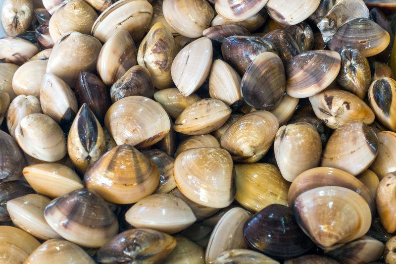 Full frame shot of shells