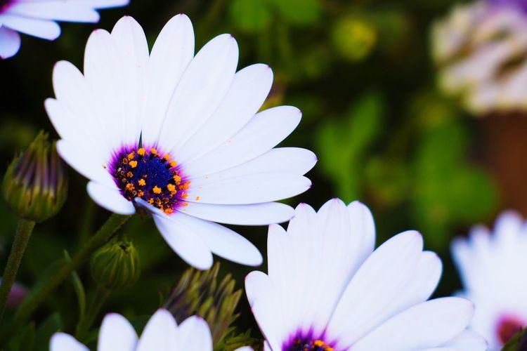 Taking Photos Enjoying Life Flowers Bokeh Nature Morning Lebanon Close-up Eyem Nature Lovers  EyeEm Gallery Showcase March Pastel Power Purple White Green