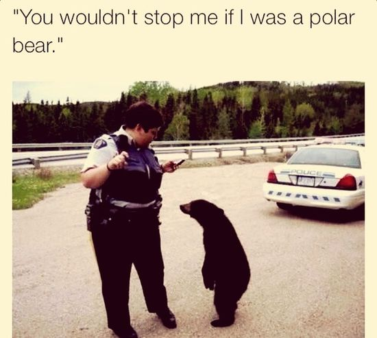To Funny Bear Cops Black And White Get Along People Love Sees No Color Art Gallery Saywhat Beautiful Crazy Moments