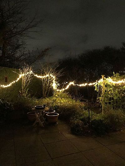 Celebration Illuminated Night Outdoors Tree Sky Grass