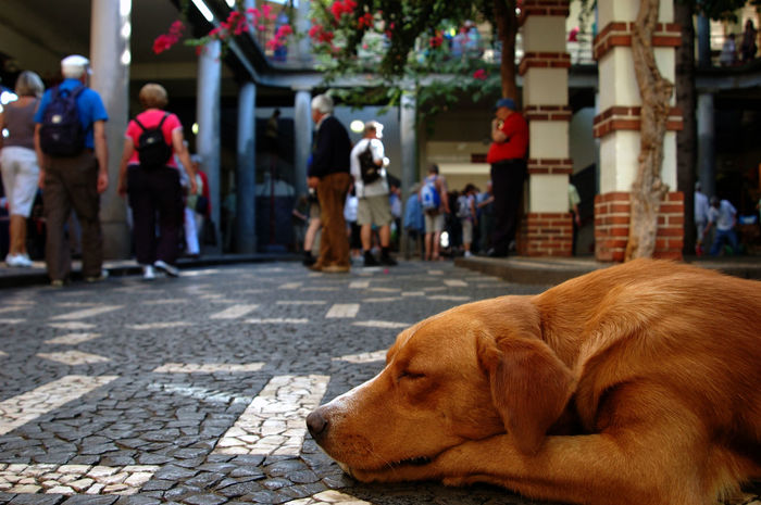 Crowdedplace Dog Market Marketplace No Stress Portugal Madeira Real People Relaxation Sleeping Sleeping Dog Streetphotography Adapted To The City