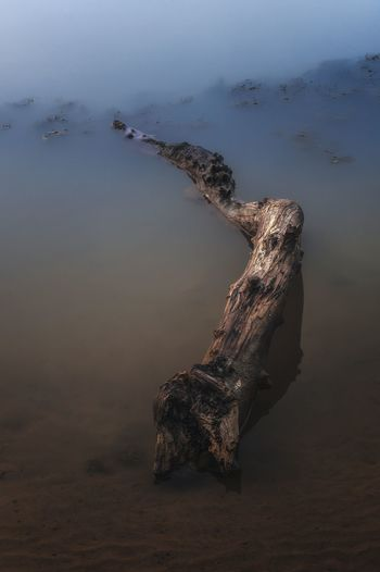 High angle view of fallen tree on river