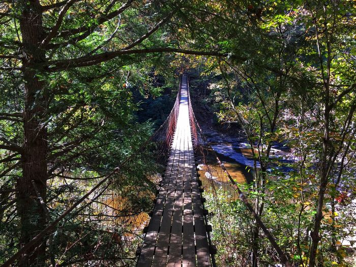 Suspension Bridge Tree Forest Outdoors The Way Forward Bridge - Man Made Structure Growth Nature Day Beauty In Nature Footbridge No People Architecture Landscape The Week On EyeEm EyeEm Best Shots Scenics Tennessee River Fall Creek Falls Bridge Tranquil Scene