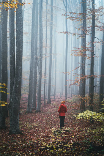 Rear view of man standing in forest during autumn