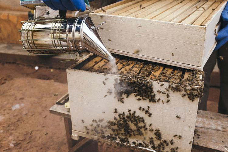 Smoker over beehive